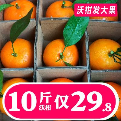 广西沃柑大果皇帝薄皮净重10斤蜜桔