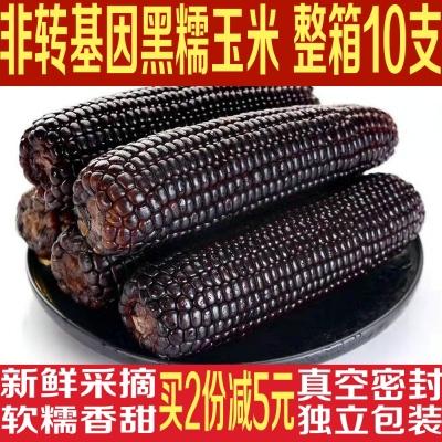 东北黑糯玉米180g*10支 新鲜甜粘黏软糯玉米非转基因独立真空包装