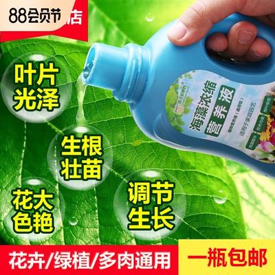 营养液养花肥料家用通用型水培花卉
